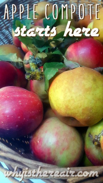 Start with gorgeous fresh apples to make your compote. These babies came from my own trees!
