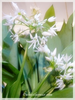 Wild Garlic has an amazing aroma