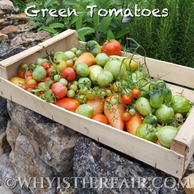 The final vestiges of Madame Thermomix's tomato crop need transforming. How about some Green Tomato Chutney?
