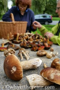 Friends and I foraged for mushrooms in the French woodlands and brought home this fabulous haul of super foods